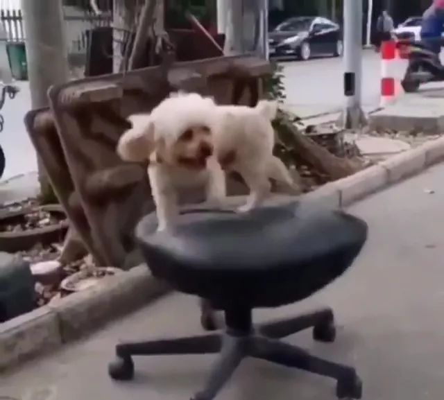Dog with cushion chair - Video & GIFs | dogs,animals,pets,seat cushion