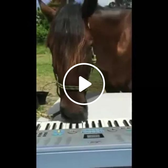 Horse Is Also A Pianist - Video & GIFs   animals, pets, horses, smart animals, piano, musical instruments