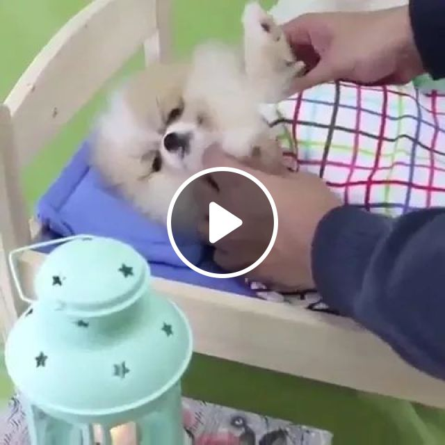 Puppy Is Taken Care Of In A Pet Care Center - Video & GIFs | animals, pets, dogs, dog breeds, pet care, pet care center, health