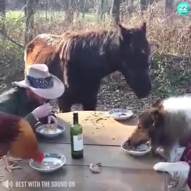 At farm, men and animals eat lunch together