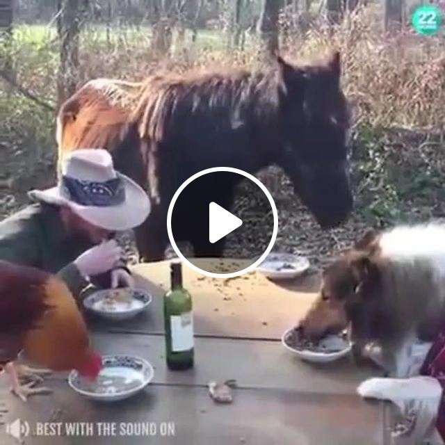 At farm, men and animals eat lunch together, farm, man, male fashion, animal, pet, lunch