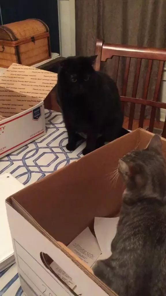 Cats love paper boxes in kitchen