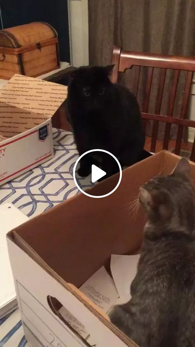 Cats Love Paper Boxes In Kitchen - Video & GIFs | animals, pets, cats, kitchen, kitchen furniture