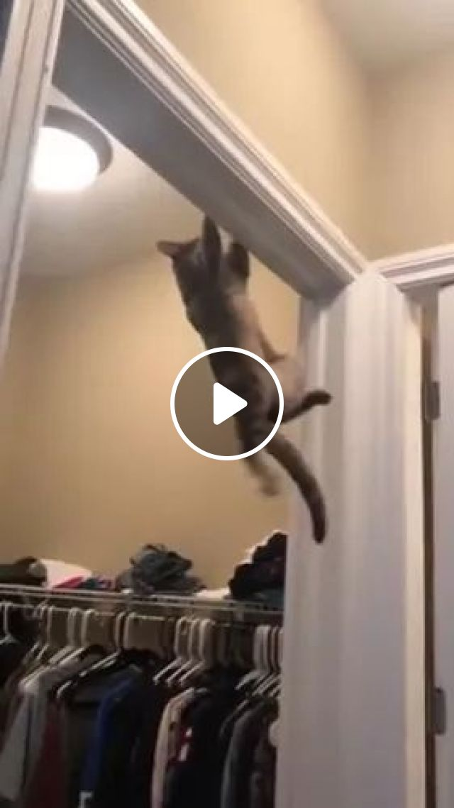 My Cat Climbed Very Well - Video & GIFs | animals, cute pets, cats, cat breeds, fashion clothing stores