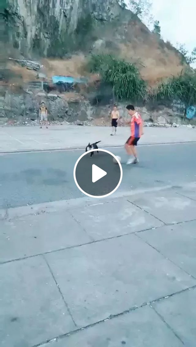 My Dog Loves Football - Video & GIFs   animals, pets, dogs, dog breeds, soccer, sports clothes
