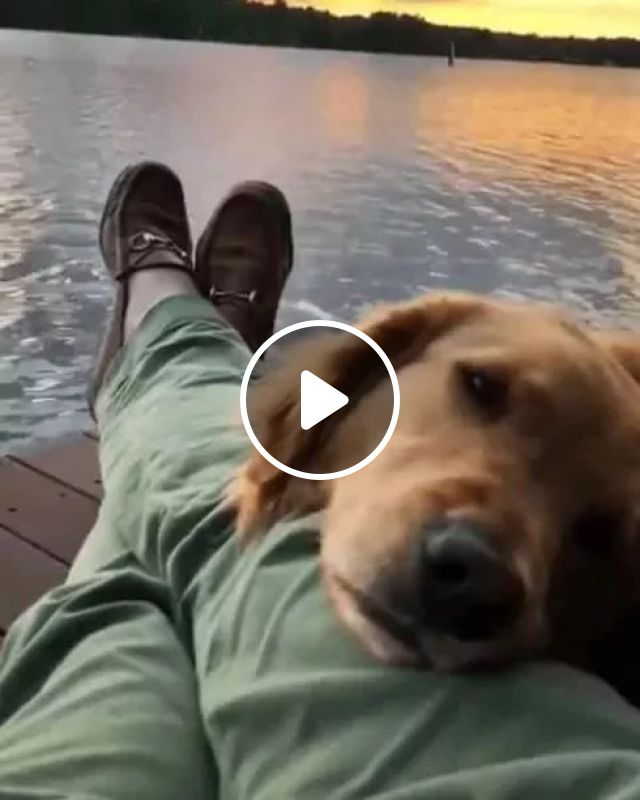 Dog And Me On Summer Vacation In Hawaii - Video & GIFs | dogs, animals, pets, vacation, hawaii travel, sea travel