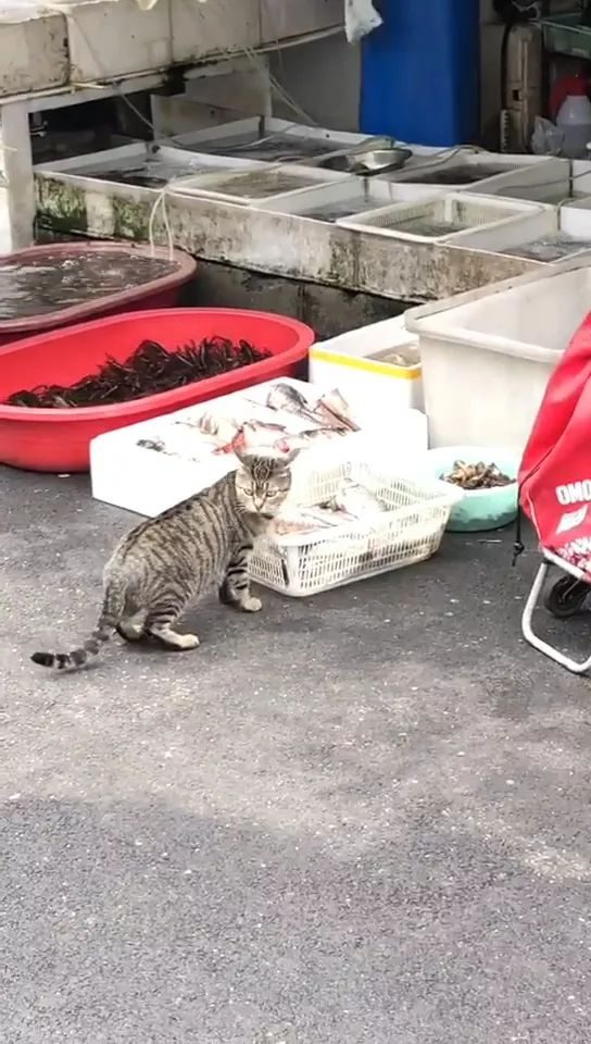 Today cat goes to a fish market in Japan