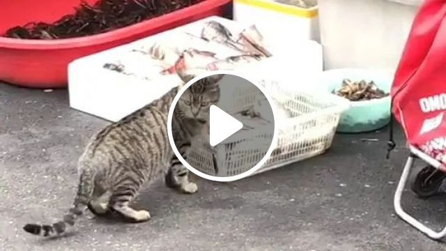 Today cat goes to a fish market in Japan, animals, pets, cats, japan travel, fish markets, seafood