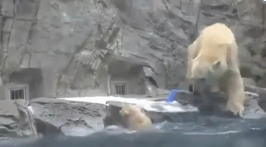 Hero, mother bear save baby bear from lake in zoo