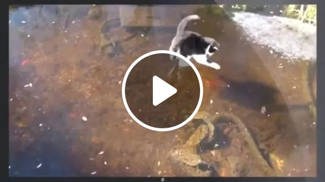 cat excitedly chased fish under ice