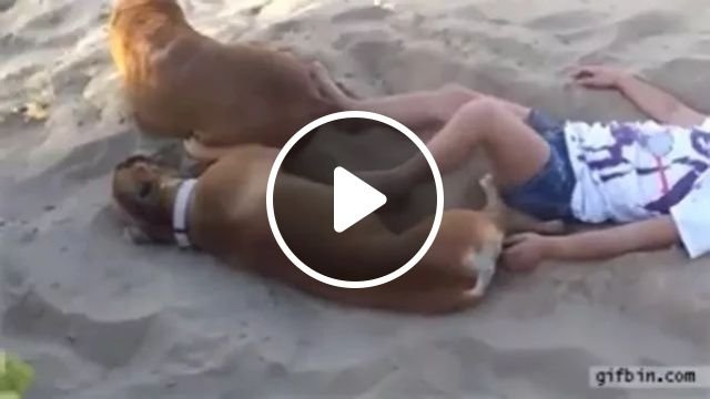Dogs and children playing on the beach, dogs, adorable, children, play, on the beach, sand, Australia travel