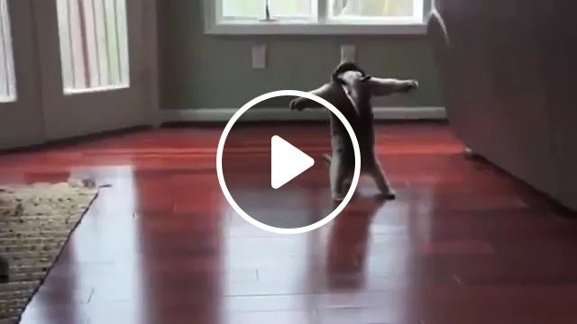 Baby Was Surprised To See Ants In Apartment - Video & GIFs   Cute baby, baby clothes, friendly animals, luxury apartments, wooden floor