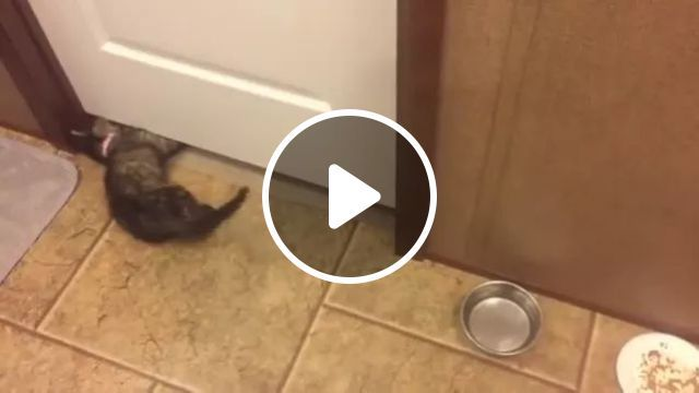 Cats Can Go Around House - Video & GIFs | cats, adorable, can, go around, indoors, pets, animals