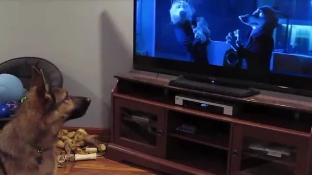 dog watches TV and imitates action it sees