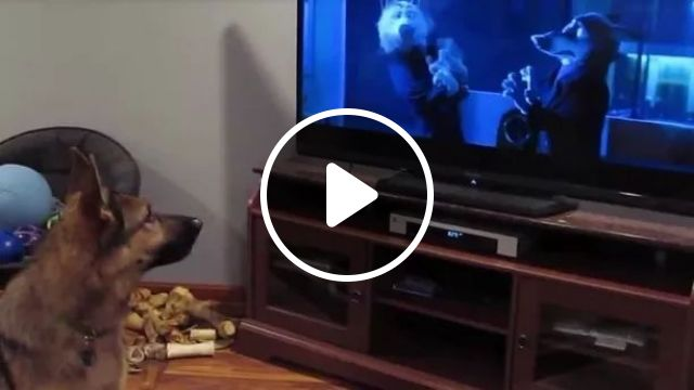 Dog Watches TV And Imitates Action It Sees - Video & GIFs | Smart dogs, living room furniture, flat screen TV, funny animals