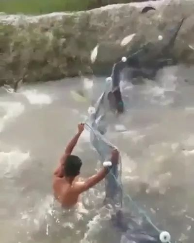 Camera recording men catching fish in raceway with a net