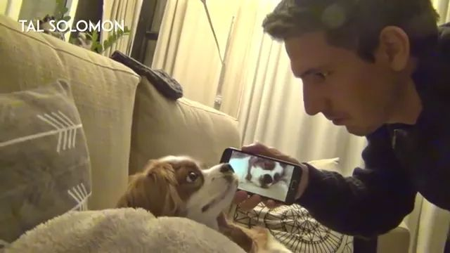 Smartphone camera records a very loud snoring dog