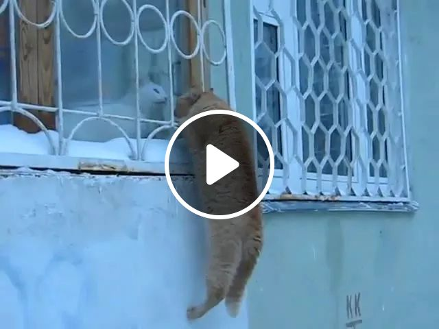 cat tries to climb iron fence near to meet his friend