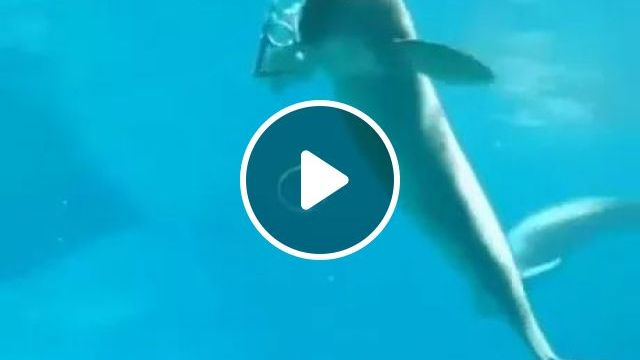 Camera Recorder, Talented Dolphin Blowing Bubbles Under Water - Video & GIFs   camera recording, dolphin, talent, blowing bubbles, underwater, animal