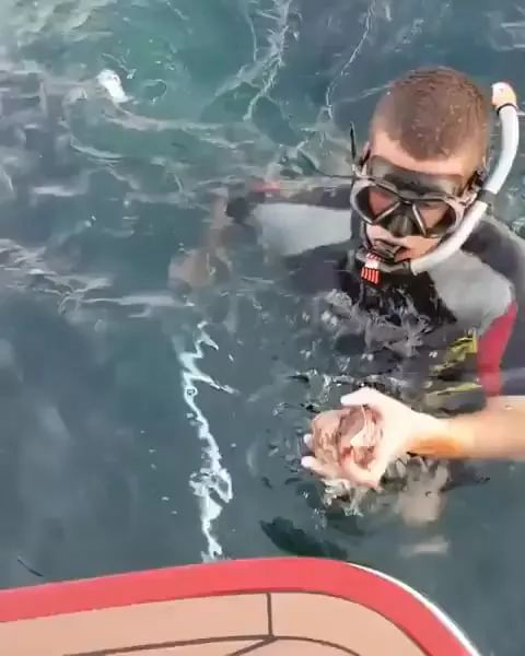 diver picked up octopus hidden in sunglasses placed on the tourist boat