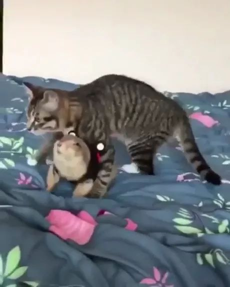 A cat and their dramatic woodchuck