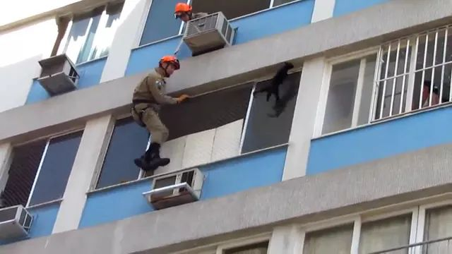 rescue team is trying to save cat on the building - Video & GIFs   rescue team,protective gear,trying,saving,cat,adorable apartment building,air conditioning