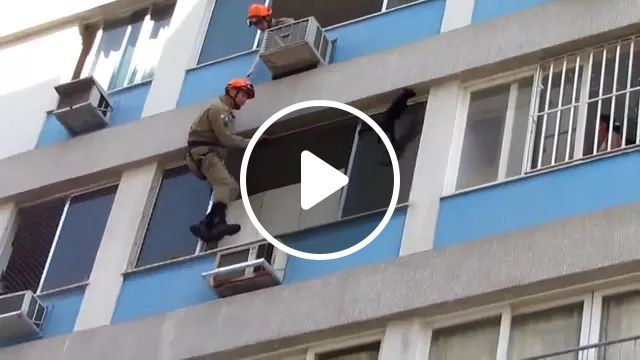 Rescue Team Is Trying To Save Cat On The Building - Video & GIFs | rescue team, protective gear, trying, saving, cat, adorable apartment building, air conditioning