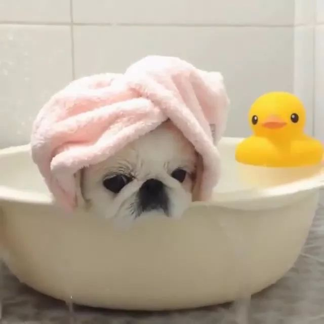 Lovely puppy in a plastic basin,everything flows, everything changes