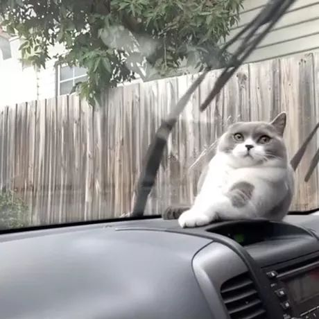 lol..cat thinks it's going to get hit by windshield wipers