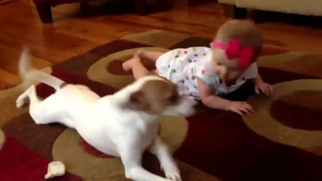 smart dog instructs baby to crawl in living room