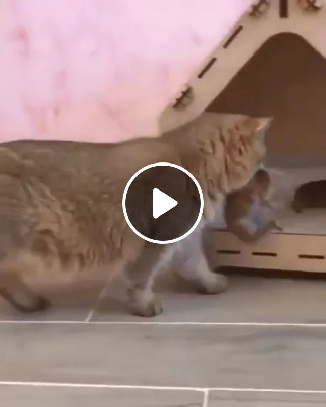 Kittens are moved to new homes for cats