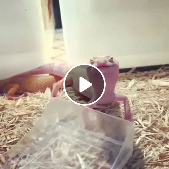 Give Me Your Smile - Video & GIFs | animals, pets, funny, care pets