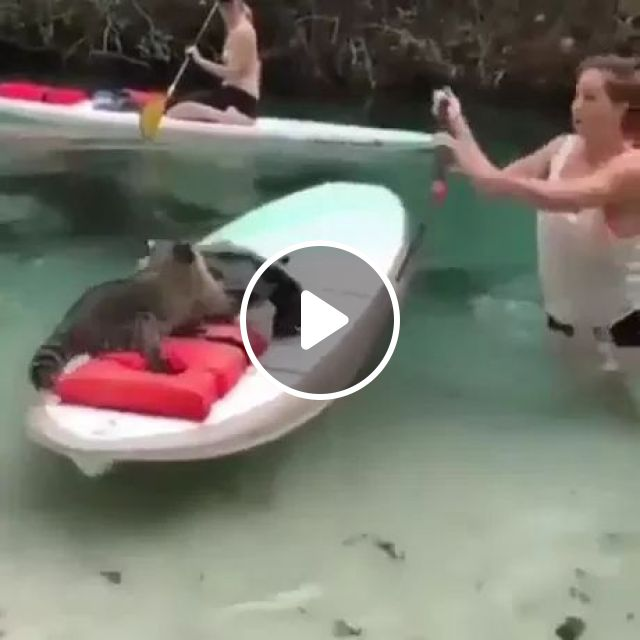 Must Be A Bad Neighborhood - Video & GIFs | nature, river, water, girl, adorable, funny, American travel