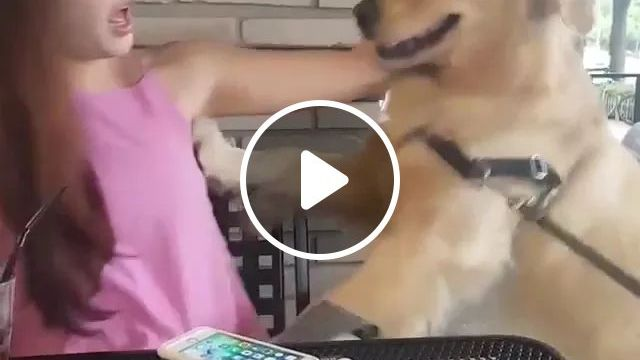 Lucky Smartphone Doesn't Fall When Dog Comes Close - Video & GIFs | smart phones, dogs, pets, animals, luxury phones