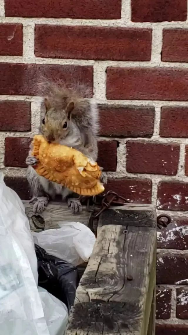 Here we have a squirrel eating an empanada