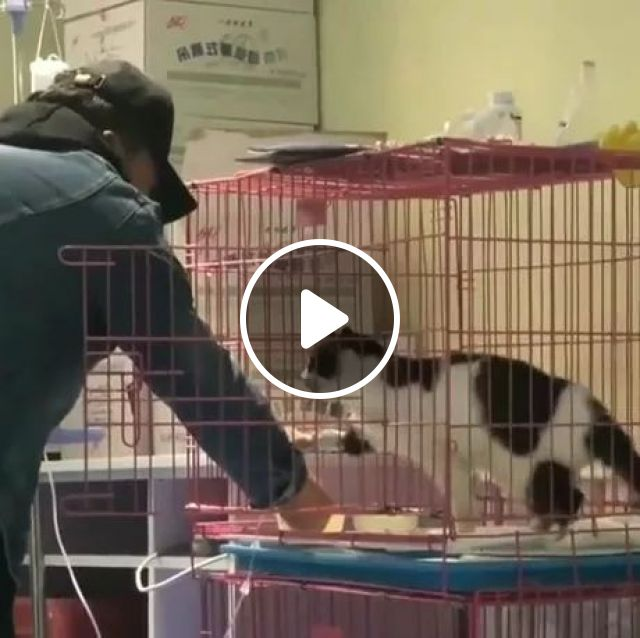 Injured Cat Is Taken Care Of At A Pet Care Center - Video & GIFs   cat, injured, in health care, a pet care center