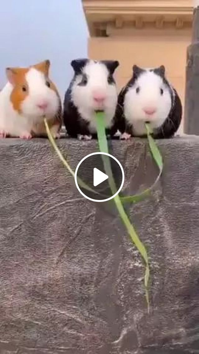 Best Part Is How In End They Go Back To Chewing In Unison As If Nothing Had Happened - Video & GIFs | Friendly animals, cute mice, pet care, animal food