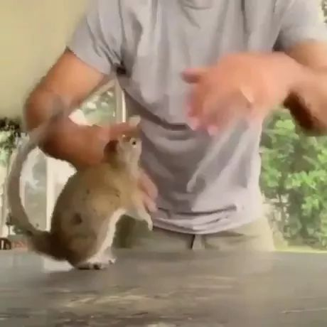 A playful squirrel and his human