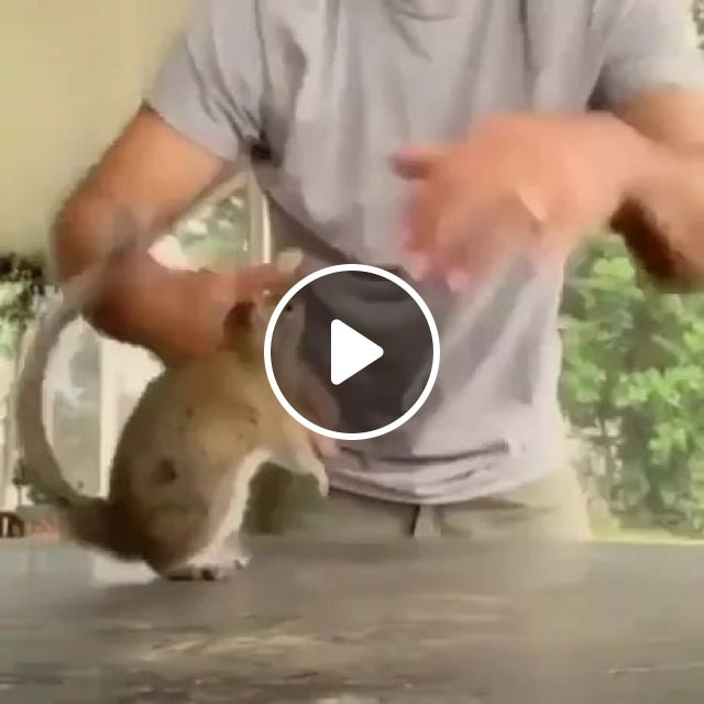 A Playful Squirrel And His Human - Video & GIFs   playfully, squirrel, people, friendly, animals, pet, smart