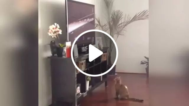 Cats Are Swaying While Watching Racing On The Big Screen TV - Video & GIFs   cat, pet, animal, watch, luxury television, big screen, sports, racing, sports car