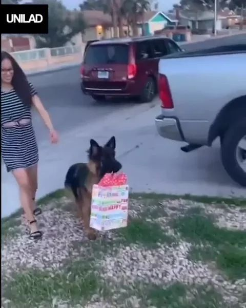 Get gifts from trunk of car, Dog brings gifts into house.
