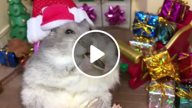 Mouse Was Very Happy To Receive A Christmas Present - Video & GIFs   Mouse, animals, pets, rejoice, receive gifts, christmas