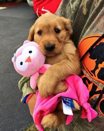 Lovely dog ​​with a gift