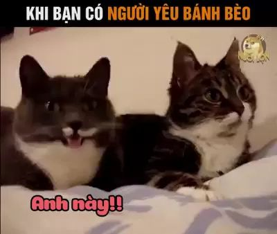 Cat language,two lovely cats are talking to each other friendly