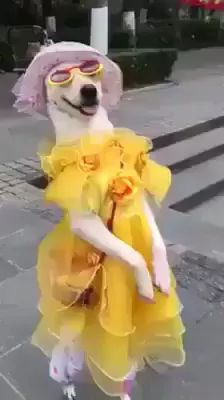 Dog with fashionable clothes walking on the street
