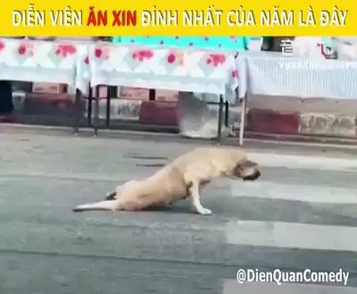 Why does dog crawl with its front legs on the Chinese street