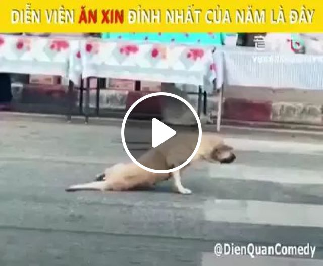 Why does dog crawl with its front legs on the Chinese street, Smart dogs, front legs, Chinese streets, funny animals