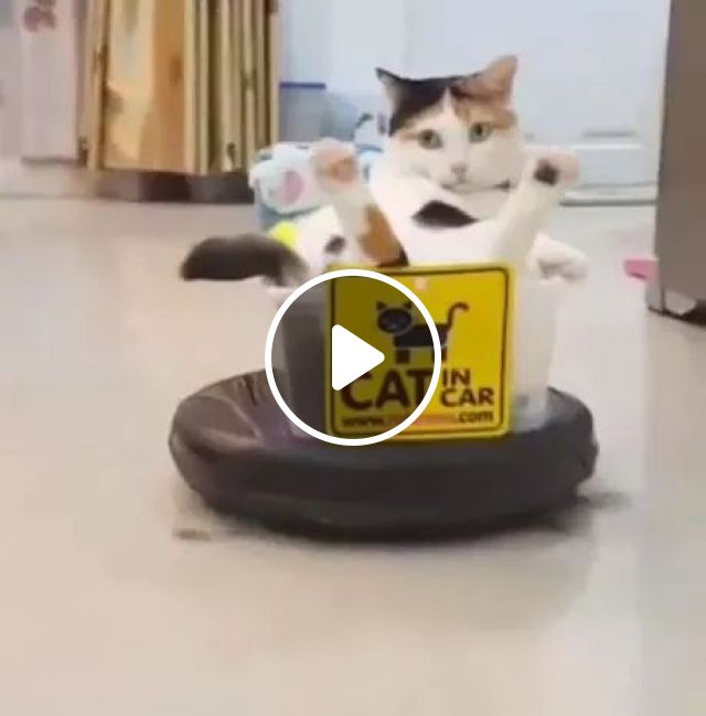 Lazy Cats On The Machine Automatically Wipe Living Room Floor - Video & GIFs | animals, pets, cat, cat breeds, living room, living room furniture, floor, floor cleaning machine