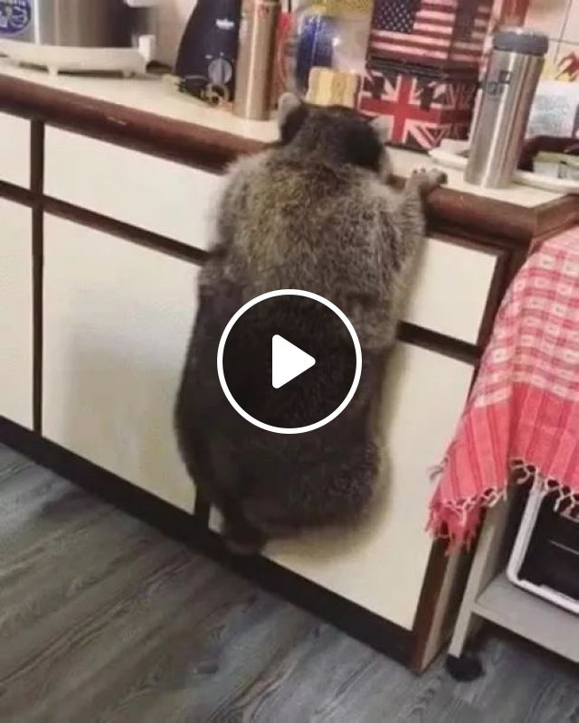 In Kitchen A Lot Of Delicious Food - Video & GIFs | kitchen, kitchen furniture, kitchen appliances, cooking utensils, electrical appliances, delicious food