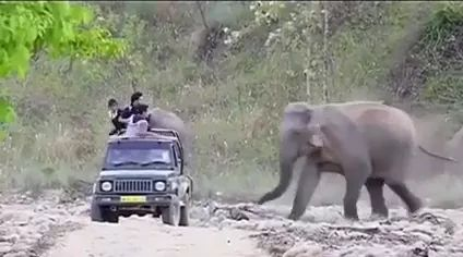 Off-road vehicle carrying tourists in park and friendly elephant